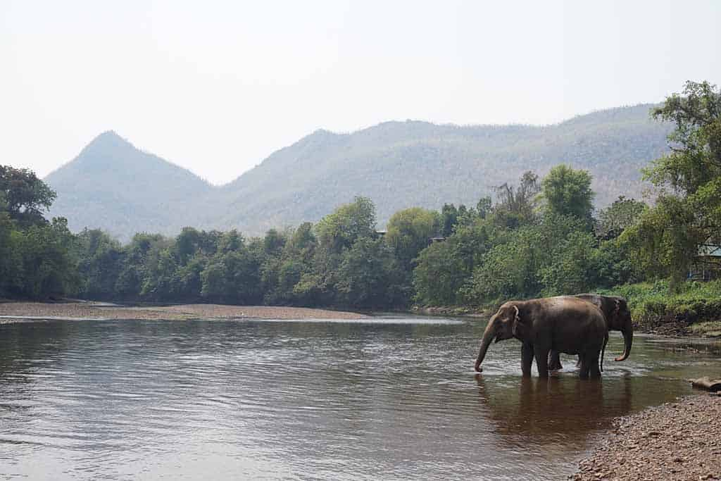 Chiang Mai Elephant home is an ethical elephant sanctuary in Thailand.
