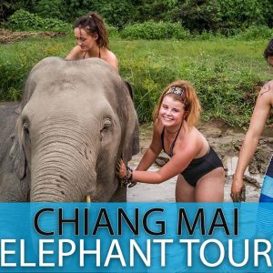 Chiang Mai Elephant Sanctuary (Full Day)