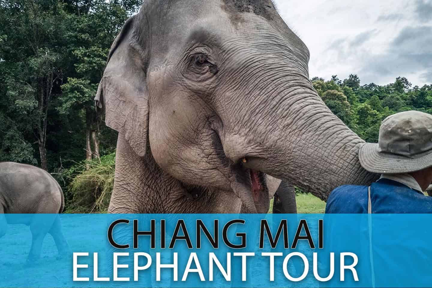 Chaing Mai Half Day Elephant Sanctuary Tour