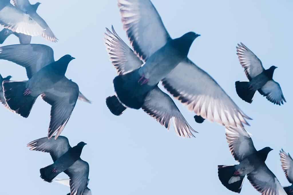 Lost in Translation: Large Fines for Feeding Pigeons in Bangkok Introduced
