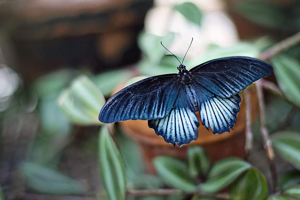 Bangkok Butterfly Garden: The Most Gentle Badass Thing to Do in Thailand