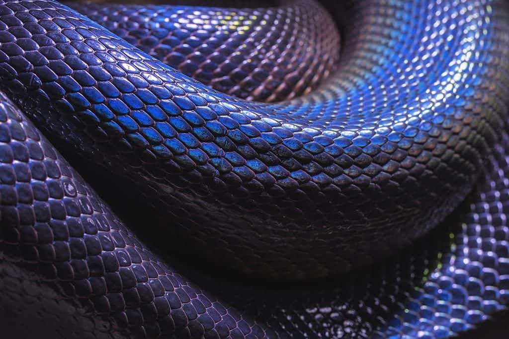 Inside the Bangkok Snake Farm: 100 Points to Slytherin