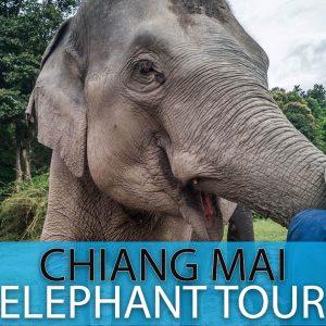 Chiang Mai Elephant Sanctuary (Half Day)