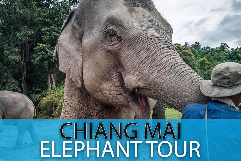Chaing Mai Half Day Elephant Sanctuary Tour