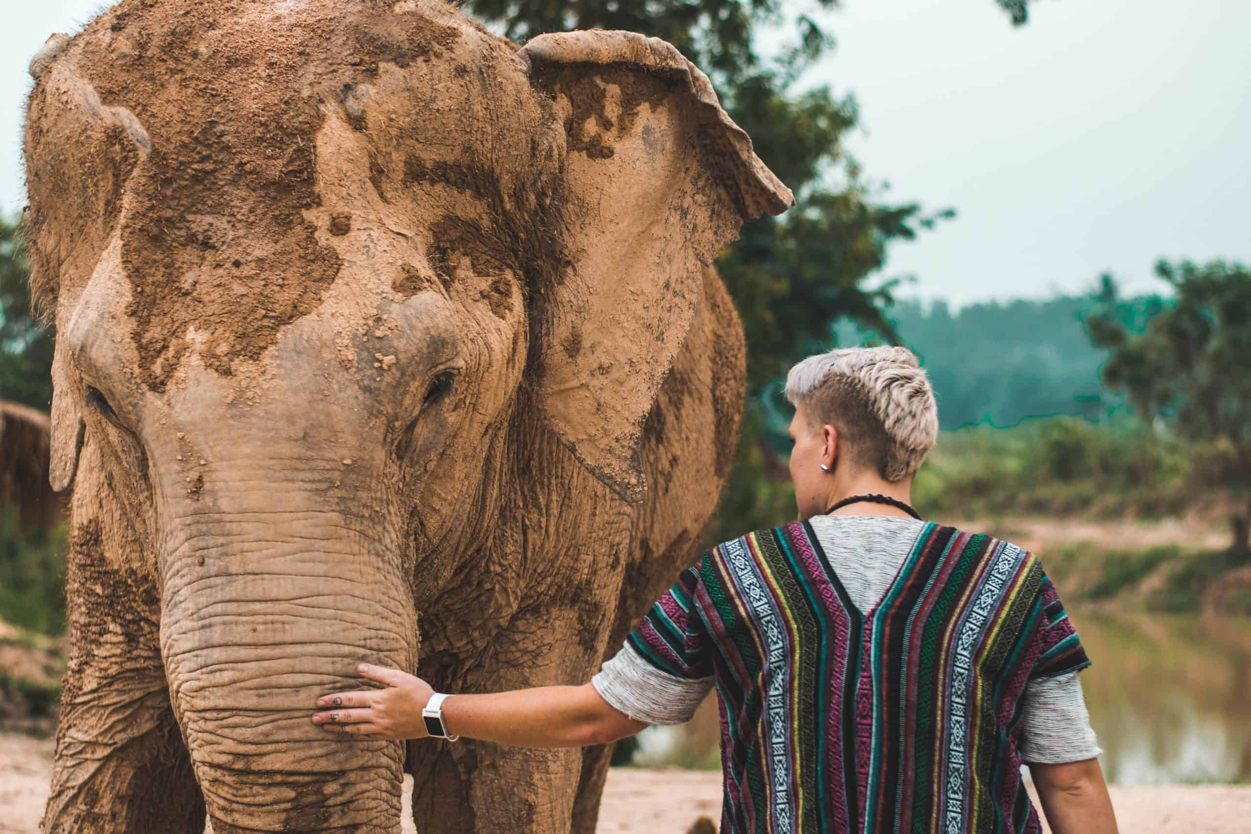 Ethical Elephant Sanctuaries in Phuket: An Elephant Never Forgets!