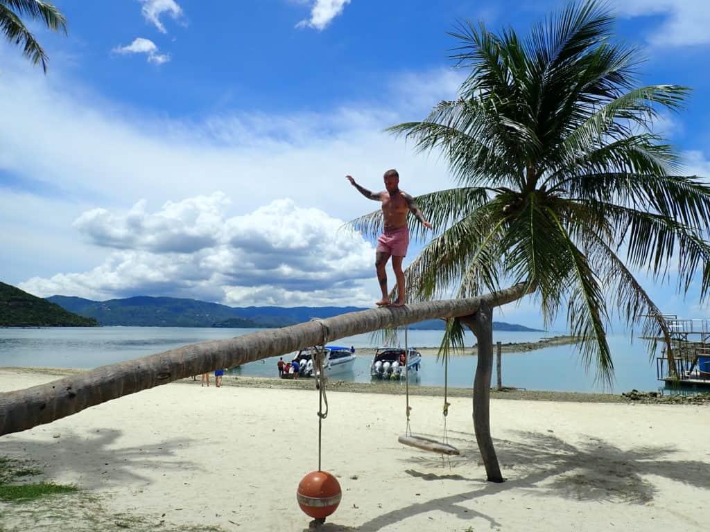 Thailand palm tree