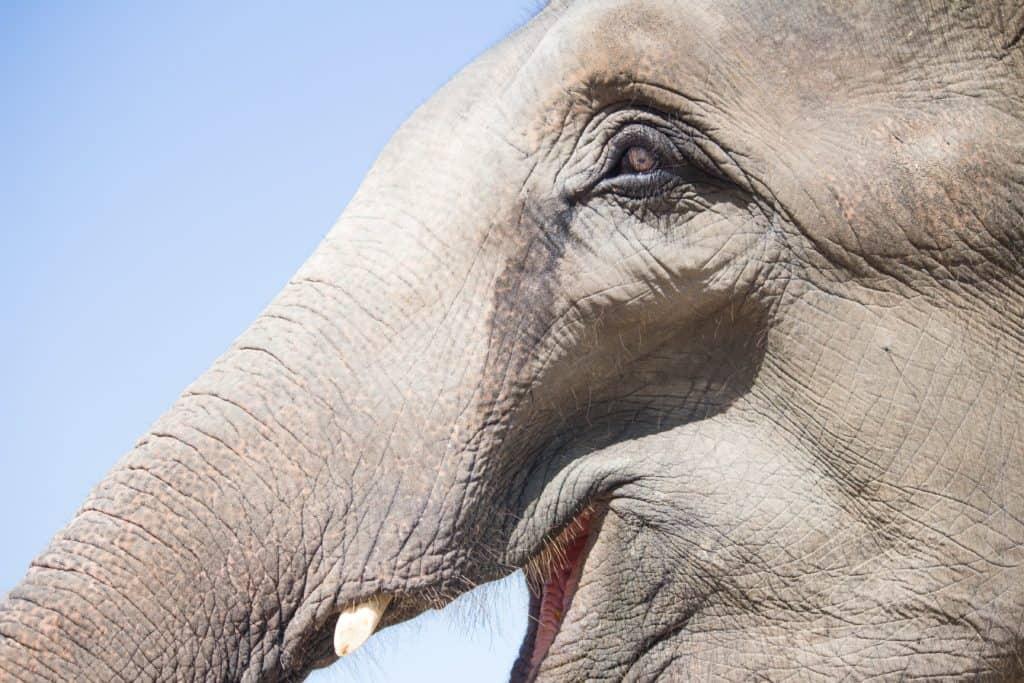 Phajaan, crushing of elephants' souls