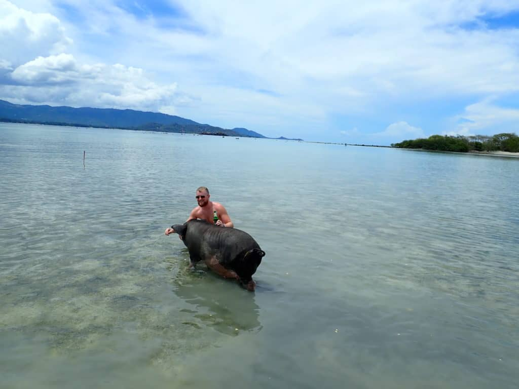 Pig Island, Koh Samui