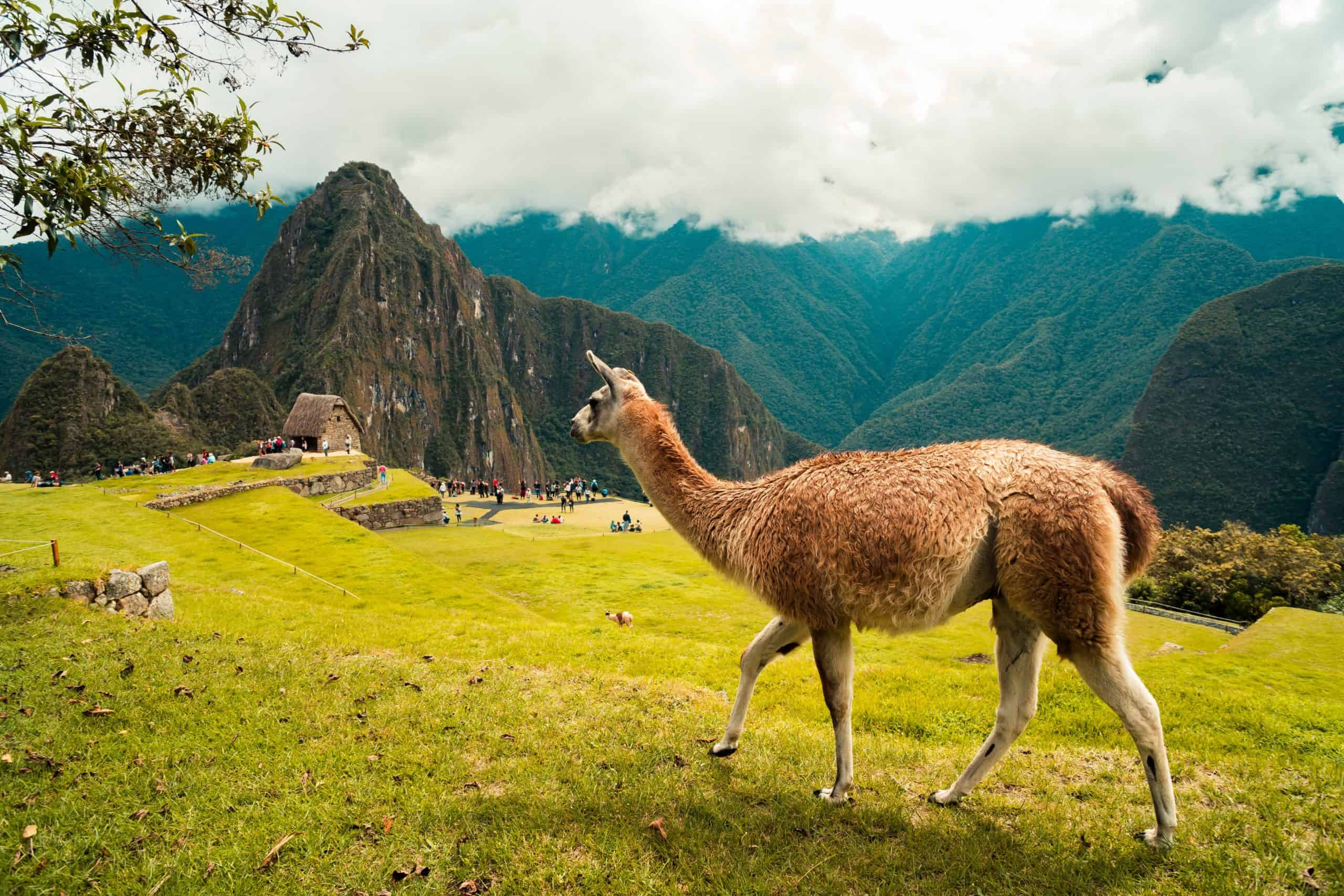 A Guide To Make Your Trip To Machu Picchu A Successful One